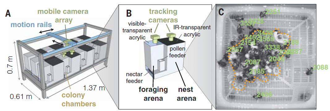 Chronic exposure to the neonicotinoid imidacloprid alters nest behavior and social interactions in bumblebee colonies. Schematic diagrams of (A) the robotic platform for tracking bee behavior inside multiple colonies and (B) inside a single colony chamber. (C) A sample tracking of worker bees inside the nest, each with a unique ID number shown in green. The range dotted line shows the nest structure.