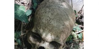 Human skull discovered in bush, Verulam. Photo: RUSA
