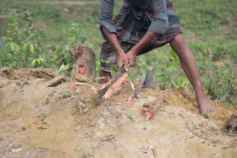 A Rohingya boy chopping wood from tree stump he freed from soil near Kutupalong-Balukhali refugee camp on Bangladesh. Photo by Khaamil Ahmed/Mongabay.
