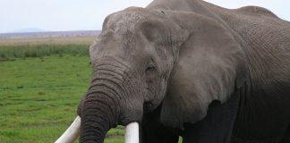 Protests: Kruger National Park Numbi gate closed again