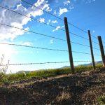 Farm attack, 5 armed men kidnap workers, rob vehicles, Delmas