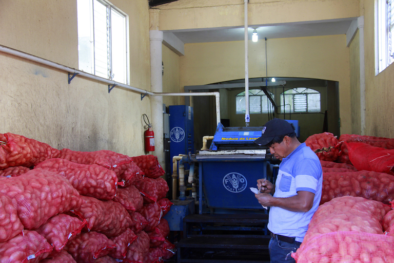 A potato trader takes notes at the commercial terminal in Concepción Chiquirichapa, where potatoes are traded daily during the harvest season. Image by Jorge Rodríguez for Mongabay.