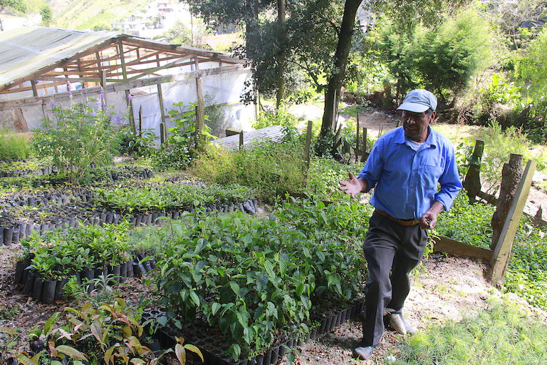 Marcelino Aguilar shows off Concepción Chiquirichapa's nursery, where the town grows trees for its reforestation program on Siete Orejas mountain. He says the town intends to plant 30,000 trees in 2019 and to provide seeds for other towns' reforestation projects. Image by Jorge Rodríguez for Mongabay.