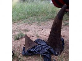 SANparks employee and 3 others arrested for Rhino poaching. Photo: SAPS