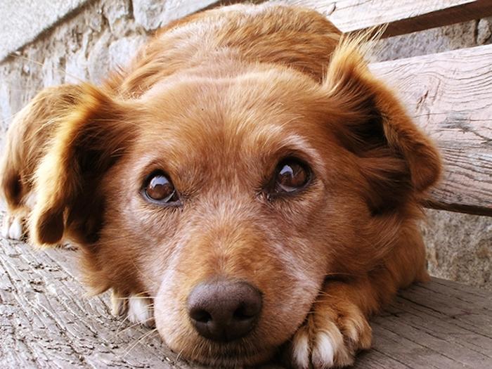 barkymate dog service.jpg