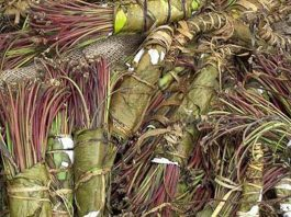 Suspect nabbed with R50k worth of Khat, Bloemfontein