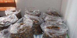 R5.5 million abalone haul, 2 suspects arrested, Canal Walk, Century City. Photo: SAPS