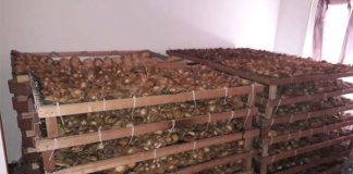 Abalone worth R500 000 seized in Malmesbury. Photo: SAPS
