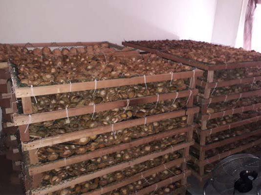 Abalone worth R500 000 seized in Malmesbury. Photo: SAPS