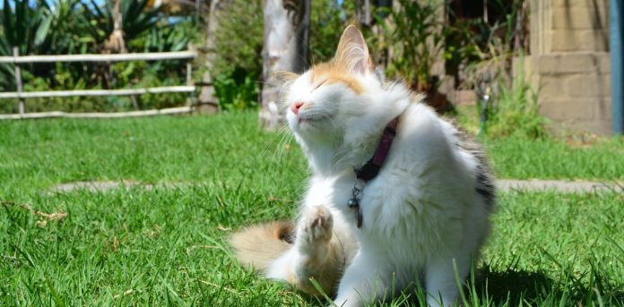 Fleas, as pet owners know, are a common menace. Aileen van der Mescht