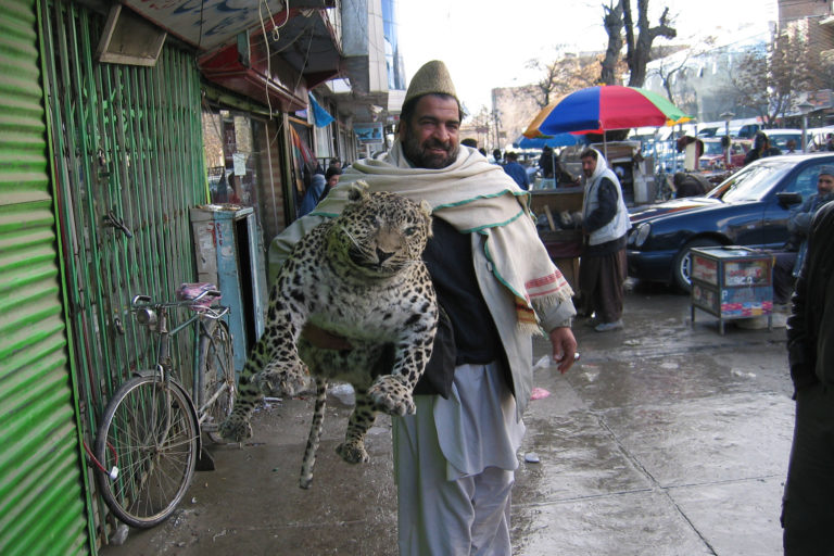 Afghan man carrying a stuffed leopard down the street in Kabul. The real driver of wildlife trafficking in Afghanistan was however international military forces, humanitarian NGOs, and development contractors. Credit WCS/Lisa Yook.