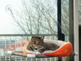 What is a cat window perch and why should you use it?