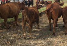 Crackdown on stock theft on Free State farms. Photo: SAPS