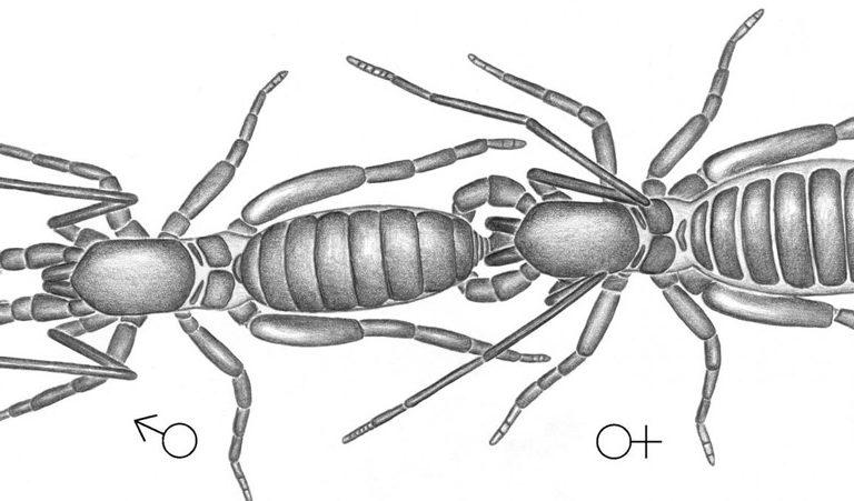 Scorpion forex