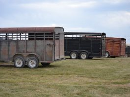 Keeping Your Horse Safe in South Africa: How to choose the Best Horse Trailer?