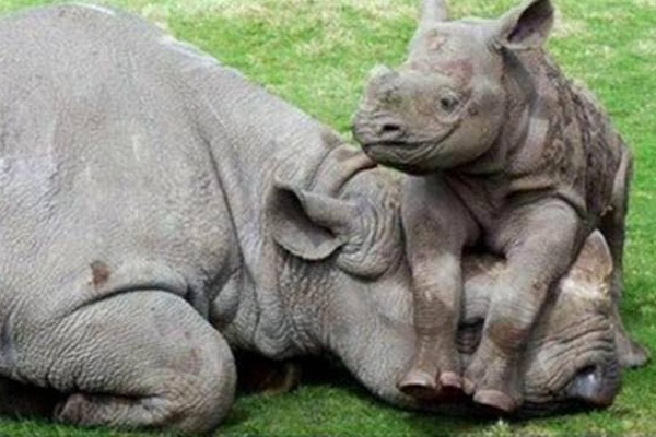 167 Rhino horns recovered, two suspects in court, Brits