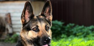 K9 unit sniffs out drugs in suspects stove, Florida