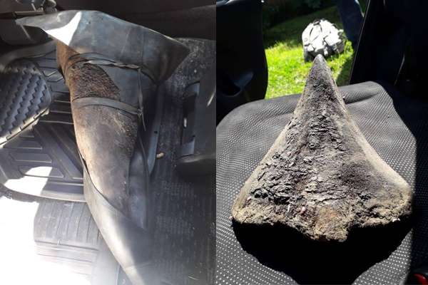 Another two incidents of poached rhino horns being uncovered. Photo: SAPS