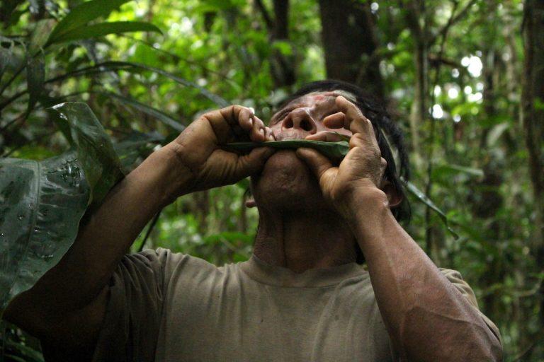 Uno de los hombres Waorani usa una hoja larga que tomó de la selva para producir un sonido agudo con el que llaman a los tucanes en jornadas de cacería. Foto: Daniela Aguilar.
