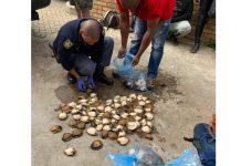 K9 unit arrest 4 abalone poachers, Noordhoek beach, PE. Photo: SAPS