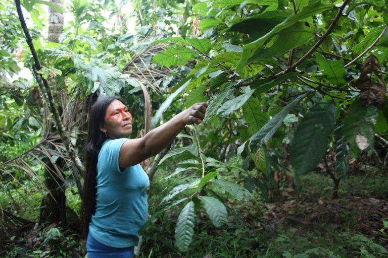 Día Internacional de la Mujer:Mencayn poda las plantas de cacao para que puedan crecer mejor. Foto de Valeria Sorgato.