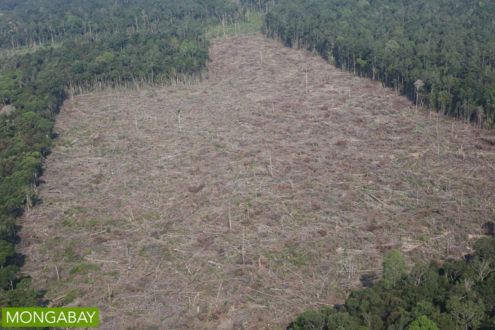 Illegal deforestation for palm oil production in Sumatra in 2015. Photo by Rhett A. Butler