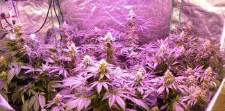 7 Pro Tips To Find The Right LED Grow Lights For Your Garden