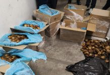 Two suspects arrested with R800k worth of abalone, Worcester. Photo: SAPS