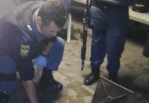 250 Crayfish tails and mandrax recovered,couple arrested, Parow. Photo: SAPS