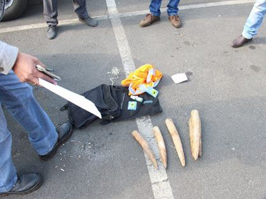 Suspects arrested with endangered species and elephant tusks. Photo: SAPS