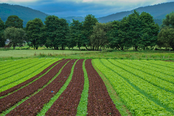 Crisis as South Africa is heading for enormous food shortage