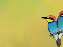 European bee-eater (Merops apiaster) Kiran Dhanjal-Adams