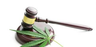 Legal Dagga: Major Law Change Makes CBD Legal To Sell In South Africa