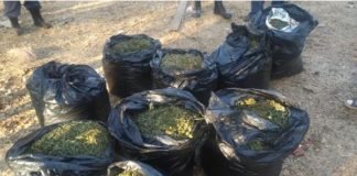 Two elderly woman bust for dealing in dagga on Hennopsrivier plot. Photo: SAPS