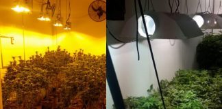 Hawks continue clamping down on hydroponic dagga labs in the Cape. Photo: SAPS