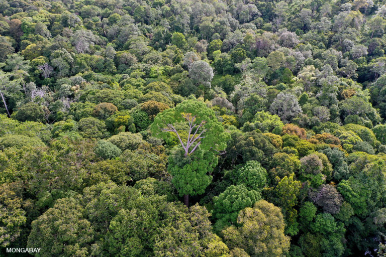Intact rainforest in Indonesian Borneo. Photo by Rhett A. Butler.