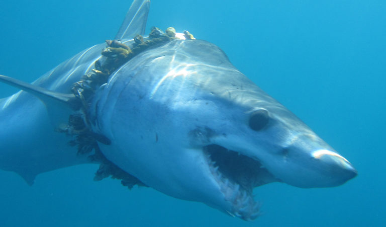 Thousands of sharks and rays are likely entangled in plastic polluting Earth's oceans | South ...