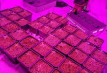 Hydroponic dagga lab uncovered, Rondeberg. Photo: SAPS