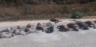 Poachers arrested with numerous wildlife species, Graskop. Photo: SAPS
