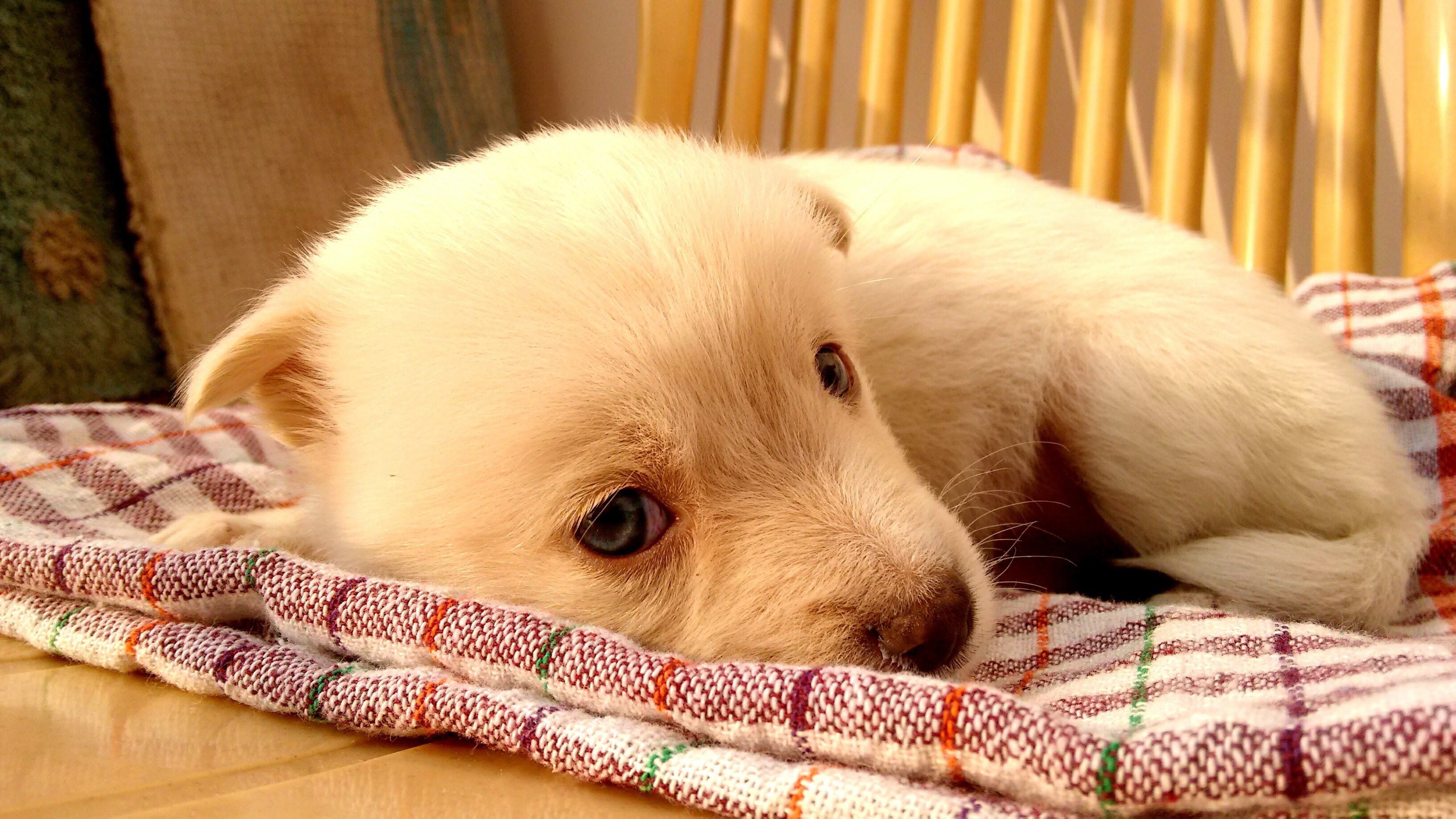 Puppy Sleep.jpg