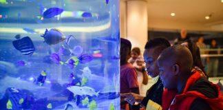 Autism and aquarium