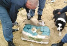 Dagga consignment worth R100k sniffed out, Port Nolloth. Photo: SAPS