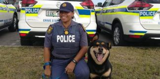 PE K9 'Jack' tackles and arrests two robbery suspects. Photo: SAPS