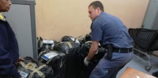 Million rand dagga bust in Kimberley. Photo: SAPS