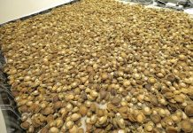 Another massive abalone bust, Cape Town. Photo: SAPS