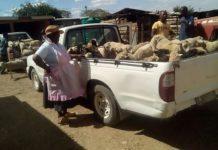 Mthatha stock theft unit recover stolen sheep. Photo: SAPS