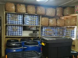Cannabis lab raided: Hawks recover R3 mil worth of dagga, Brits. Photo: SAPS