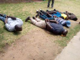 6 Elephant tusk smugglers arrested, Midrand. Photo: SAPS