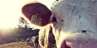 Farm attack, cattle farmer overpowered, assaulted, Stilfontein. Photo: Pixabay