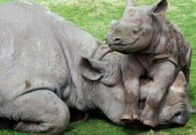 Three employees of game reserve kill and dehorn Rhino, Lephalale